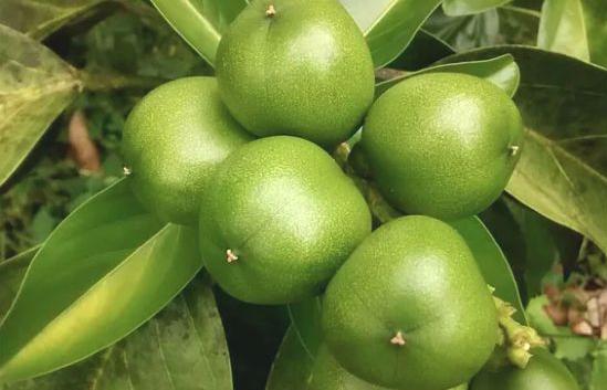 cacay frukt